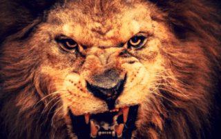 león el gruñir