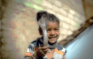 child playing with cobra