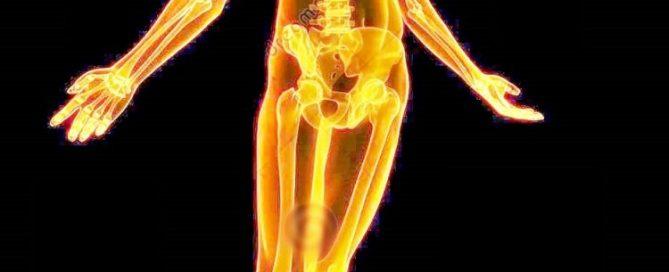 human skeleton xray view