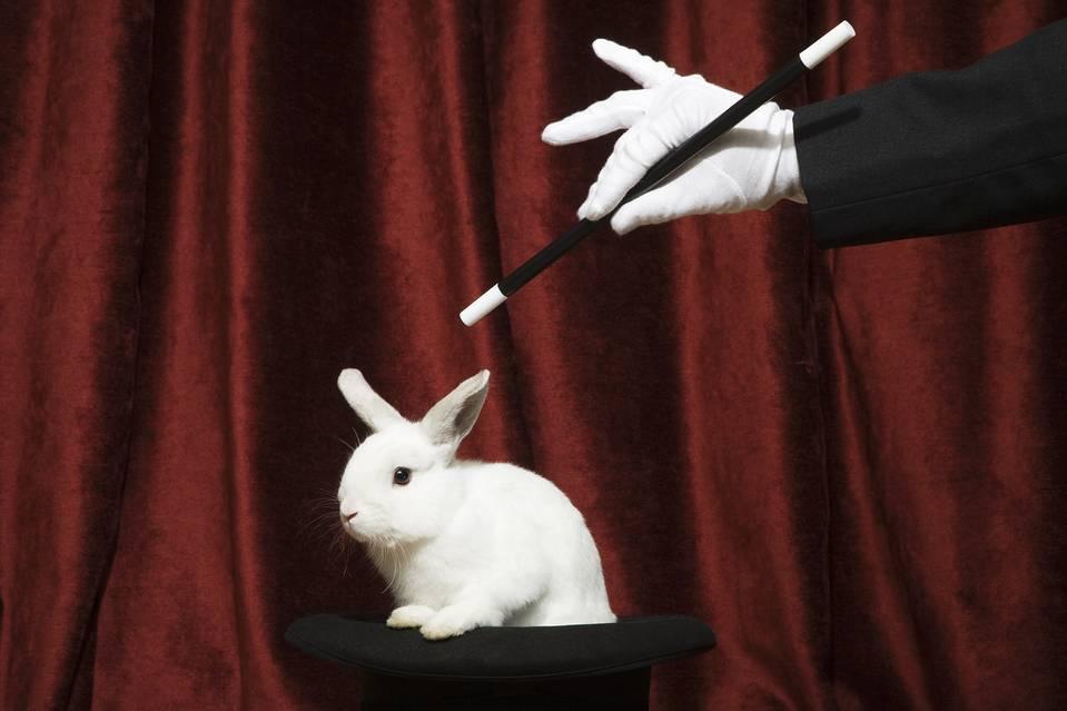 Mago saca conejo del sombrero