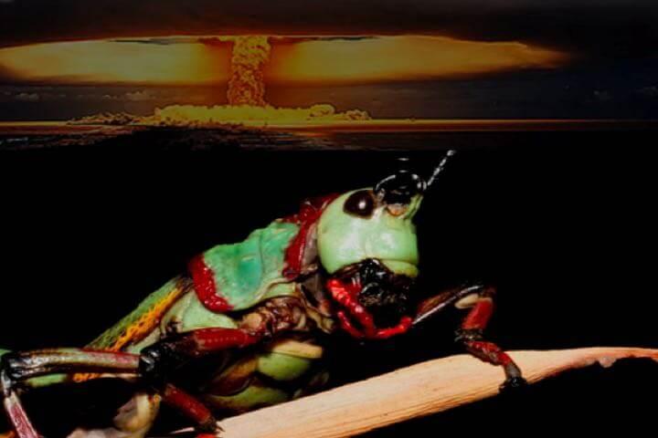 locust of Joel